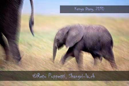 KeniaMAS2010100666