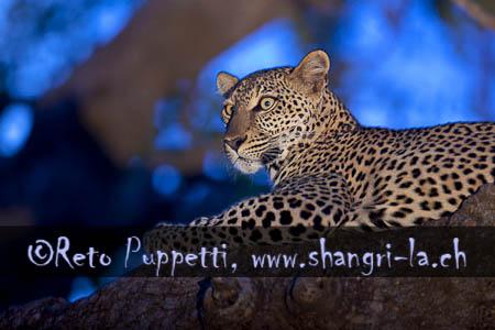 Kenia Wildlife 01 Reto Puppetti